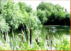 Sarkwitz-Teich