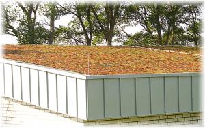 Dach-1x